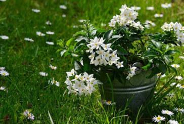Растенията, които носят положителна енергия в дома