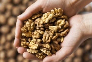Шепа орехи на ден пази от рак на гърдата