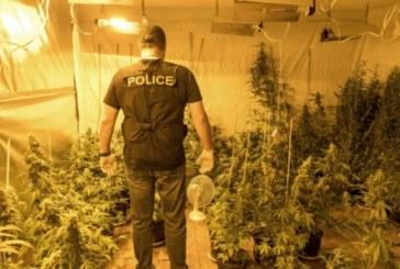 ГДБОП удари престъпна група за разпространение, производство и отглеждане на дрога