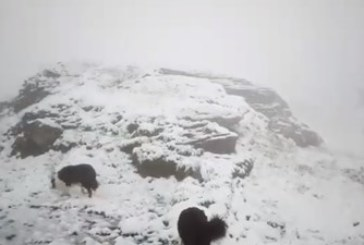 ЗИМАТА СЕ ЗАВЪРНА! Сняг в Карпатите