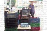 Пунктовете свалиха на 70 ст. цената на черешите, плодовете остават да гният по дърветата