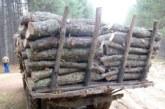 Ченгетата спипаха четирима крадци на дърва в Банско