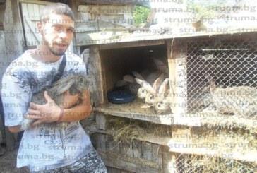 """27-годишният Ив. Хаджиев от Долна Градешница се захвана с фермерство, """"прохожда"""" в занаята с 30 заека гиганти – белгийския великан и пеперуда"""