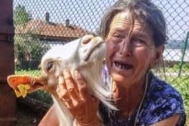 Баба Дора: Лъжат, че стадото ми е заразено, само през трупа ми!