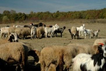 Животновъди от Югозапада даряват животни на хората в Странджа
