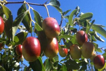 Експерти доказаха: Този плод убива раковите клетки