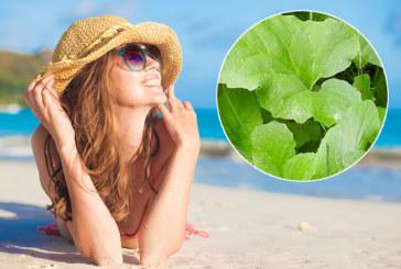 Какво да направите, за да станат слънчевите лъчи полезни за кожата