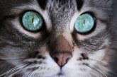 Тест! Какво ще разкрие котката за вас