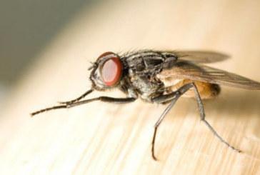 2 елементарни трика да се отървете от комарите, мухите и други гадинки в дома