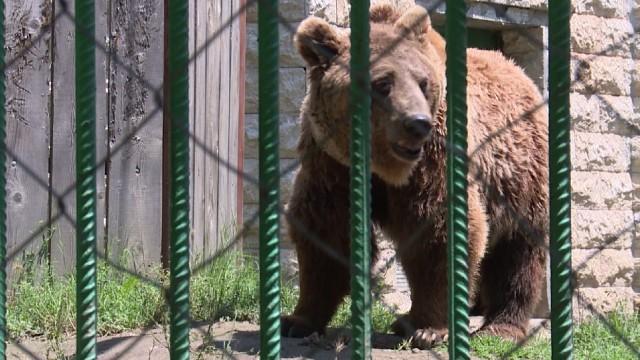 Две мечки избягаха от зоопарка в Димитровград
