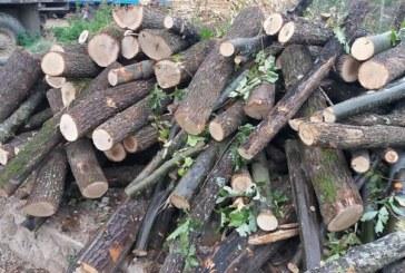 Опашка за дърва! Списъците пълни до септември
