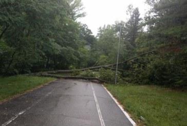 Бурята събори дърво на алеята за Бачиново