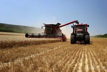 Ожънаха първите 700 дка жито в Петричко