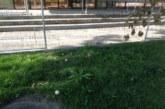 Гъби поникнаха в центъра Благоевград! Красиви са, но не ги берете, може да се отровите