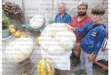 Пенсионери от Кресна отгледаха балки гиганти