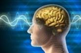 Проверете как работи мозъкът ви
