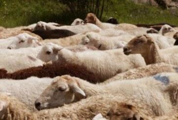 Кризисният щаб реши! Умъртвяването на животни в Шарково и района продължава