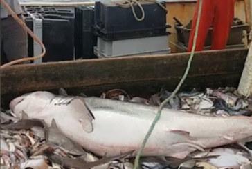Рибари уловиха страшен звяр (СНИМКИ)