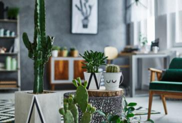 Как да запазим растенията живи, докато сме на почивка