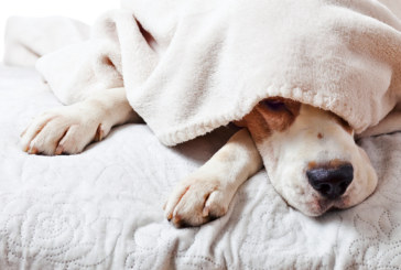 6 причини да оставиш кучето си да спи в леглото ти