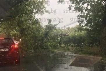 СЛЕД ГОЛЯМАТА БУРЯ! Пожарната наряза над три кубика дърва, паднали на пътя