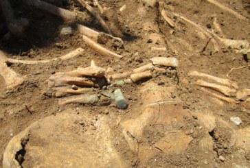 Откриха скелет без глава по време на разкопки в Червен брег