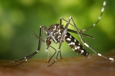 Опасна болест, пренасяна от комари, достигна и до България