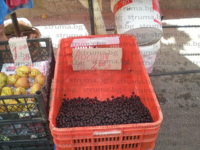 Аронията в Кюстендилско даде рекордно количество плод, не достигат берачи, плащат им по 20 ст. за килограм, хората чакали да станат картофите, там вземали повече пари
