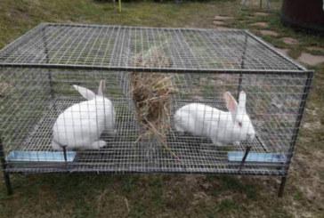 Ново 20! ЕС забранява да гледаме животни и птици в клетки
