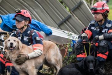 Земетресението на остров Хокайдо уби 37 души