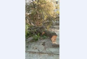 """Бурята събори дърво в кв. """"Еленово"""" на Благоевград"""