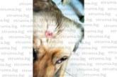 Видни дупничани в акция за спасяване живота на бездомно куче, простреляно и захвърлено в реката