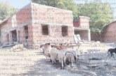 Болните от бруцелоза животни във Вуково станаха 4, 3 изчезнаха мистериозно, полиция издирва пастирите да ги изследват