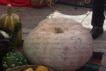 Празник на плодородието! Ябълка от поречието на Струма удари 870 грама и грабна приза на панаира в Кюстендил, овациите обра тиква, 41 кг