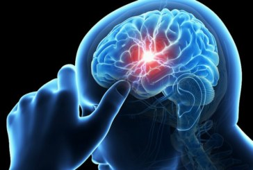 Този плод възстановява мозъка дори след инсулт