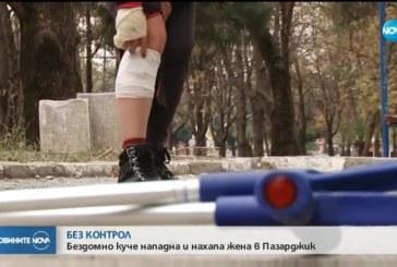 Бездомно куче нахапа жестоко жена в Пазарджик
