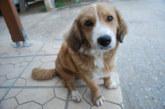 Отпада общинската такса от 3 лв. за собствениците на кучета в Разлог, но се бъркат в джоба поне 30 лв. за микрочип