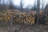 Близо 108 000 куб. метра дърва за огрев закупиха допмакинствата от ЮЗДП