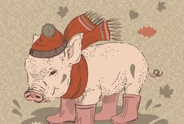 Любовен хороскоп за 2019 -та, вижте какво ще донесе Годината на прасето за всяка зодия