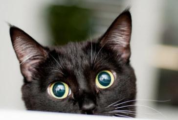 Жрици на любовта съдят бордей, изгонили ги заради котки