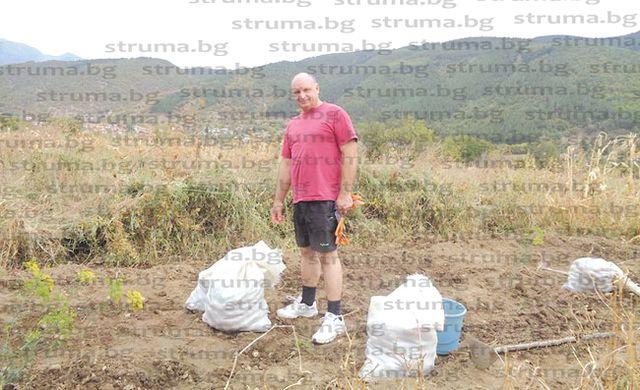 Причудливи картофи и половин тон грозде прибра от новата реколтазам. областният управител Райчо Цветин