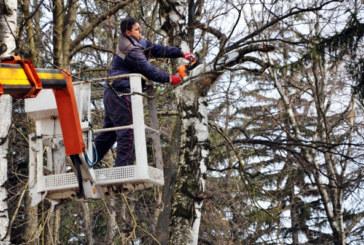 Премахват опасните дървета по пътя Петрич-Първомай