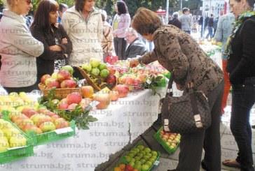 Богатата реколта срина цената на ябълките в Кюстендилско до 8 ст. за килограм