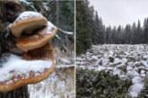 Прогнозата на синоптиците се сбъдна, ето къде натрупа сняг