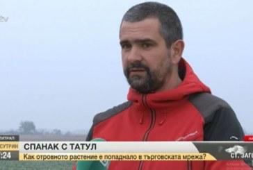 Отровният спанак пакетиран на 3 км от Пловдив!