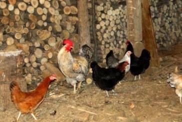 БАБХ: Отглеждането на животни в двора ни за лични нужди няма да се криминализира