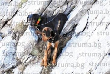 БЕЗПРЕЦЕДЕНТНА АКЦИЯ В ПИРИН! Алпинист и планински спасител рискуваха живота си в опасен район, за да спасят две ловни кучета