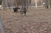 Учителка от Благоевград нахапана от безстопанствено куче, глутници превзеха града