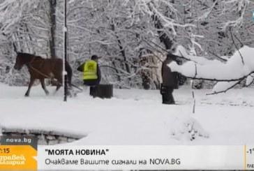 Плевенчанин шашна Виктор Николаев и Аделина Радева, водещите избухнаха в смях