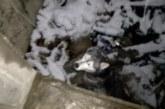 Хъски падна в асансьорна шахта в Благоевград, издирват стопанина